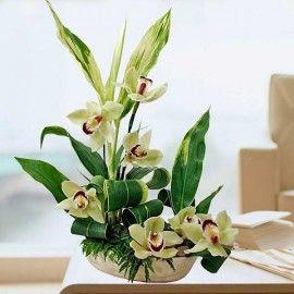 Cymbidium Orchids Green with cordyline foliage table arrangement