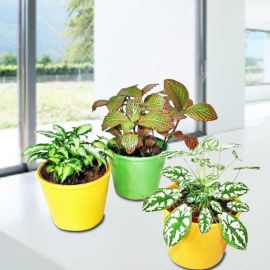 3 Assorted Indoor Plants