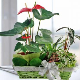 5 Assorted Plants in a Basket