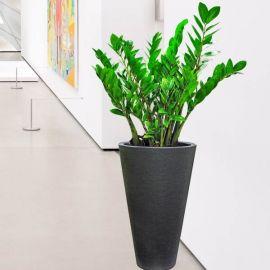 Money Tree With Planter 110cm Height