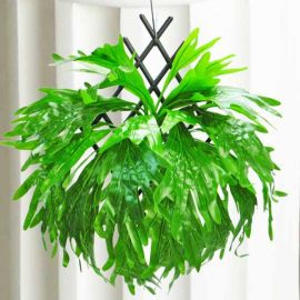 Artificial Staghorn Fern about 38 cm Height