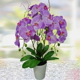 Silk Phalaenopsis Orchid Arrangement